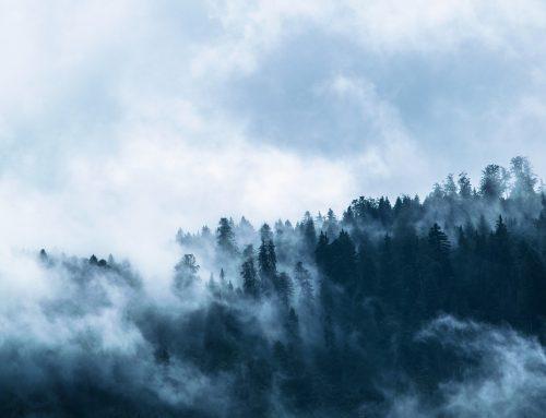 A faanyag is romlik a globális felmelegedés fokozódásával