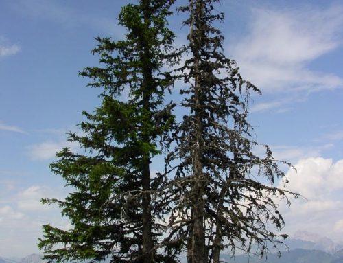 """""""A rendellenesség nem más, mint a fák testbeszéde"""""""