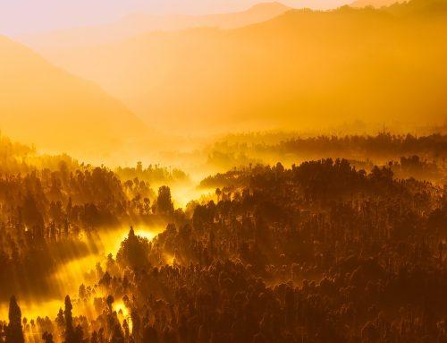 Erdők világnapja 2019-ben